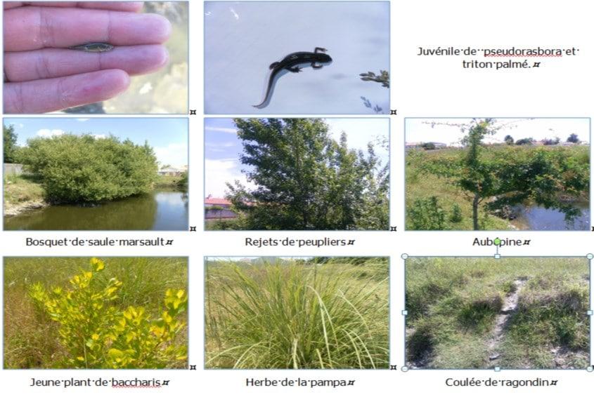 Extrait de l'expertise faune flore à Saint Hilaire de Riez